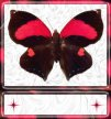 Black & Red Butterfly Sig Tag