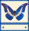 Blue Butterfly Sig Tag