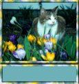 Kitty in Flowers Sig Tag